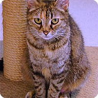 Adopt A Pet :: Cici - Victor, NY