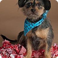 Adopt A Pet :: Jersey - Phoenix, AZ