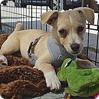 Adopt A Pet :: Nemo - Los Angeles, CA