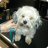 Adopt A Pet :: Lucy - Conroe, TX