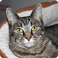 Adopt A Pet :: Gracie - North Branford, CT