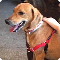 Adopt A Pet :: ROSIE - Boca Raton, FL