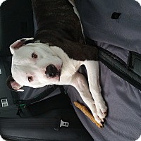 Adopt A Pet :: Earl - nashville, TN
