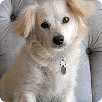 Adopt A Pet :: Amelia - Milan, NY