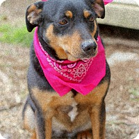 Rottweiler Mix Dog for adoption in Dalton, Georgia - Gabi