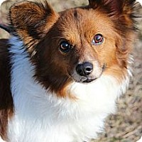 Adopt A Pet :: Bailey - Braintree, MA