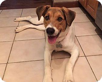 Hound (Unknown Type) Mix Dog for adoption in Cool Ridge, West Virginia - Lexie