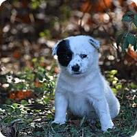 Adopt A Pet :: Fiona - Groton, MA