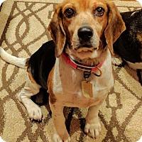 Adopt A Pet :: Opehlia - Birmingham, AL