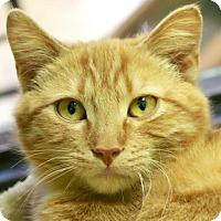Adopt A Pet :: Jonny Boy - Jefferson, WI