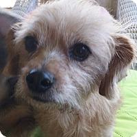 Adopt A Pet :: Abbie - Ball Ground, GA
