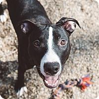 Adopt A Pet :: Maeve - Cleveland, OH