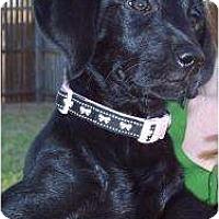Adopt A Pet :: Nyla - Altmonte Springs, FL