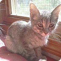 Adopt A Pet :: Aries - Grand Rapids, MI