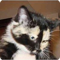 Adopt A Pet :: Pumpkin - Warren, OH