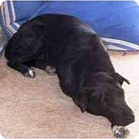 Adopt A Pet :: GABBS - YERINGTON, NV