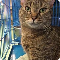 Adopt A Pet :: Aurora - New York, NY