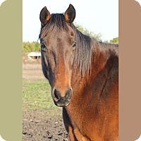 Adopt A Pet :: Meg - Farmersville, TX