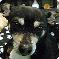 Adopt A Pet :: Romeo - Tijeras, NM