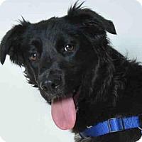 Adopt A Pet :: HEIDI - Ukiah, CA