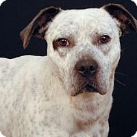 Adopt A Pet :: Freckles - Newland, NC