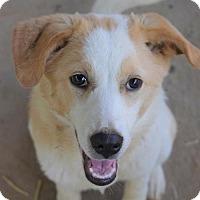 Adopt A Pet :: 'DAHLIA' - Agoura Hills, CA