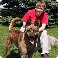 Adopt A Pet :: Castiel - Elyria, OH