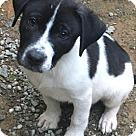 Adopt A Pet :: Baby Steinbeck