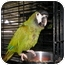 Photo 2 - Macaw for adoption in Neenah, Wisconsin - Rudy
