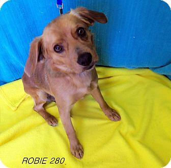 Terrier (Unknown Type, Small) Mix Dog for adoption in Waldorf, Maryland - Robie #280