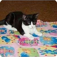 Adopt A Pet :: Gail - Secaucus, NJ