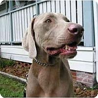 Adopt A Pet :: Campbell - Eustis, FL
