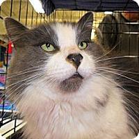 Adopt A Pet :: Pudge - Kalamazoo, MI