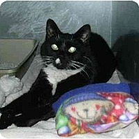 Adopt A Pet :: Terresa - Riverside, RI