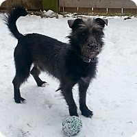 Adopt A Pet :: Roscoe - Hamilton, ON