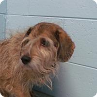 Adopt A Pet :: Sami - Muskegon, MI
