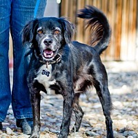 Spaniel (Unknown Type) Mix Dog for adoption in Phoenix, Arizona - Eddie