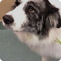 Adopt A Pet :: Chandler - Oliver Springs, TN