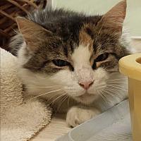 Adopt A Pet :: Mahogany - Walden, NY