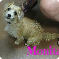 Adopt A Pet :: Monita - Scottsdale, AZ