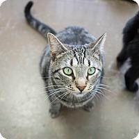 Adopt A Pet :: Newton - Montclair, CA