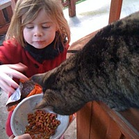 Adopt A Pet :: AlleyCat*, great with kids! - Walnut Creek, CA