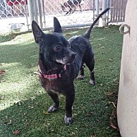 Adopt A Pet :: Chiquita - Bonney Lake, WA