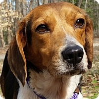 Adopt A Pet :: Rustie - Alexandria, VA