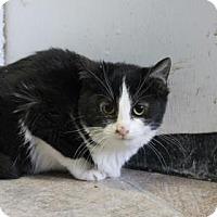 Adopt A Pet :: River - West Des Moines, IA