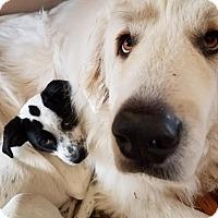 Adopt A Pet :: Lil Darlin - Sheridan, IL