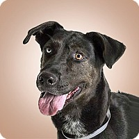 Adopt A Pet :: Mary - Prescott, AZ