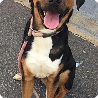 Adopt A Pet :: Jackson - NEEDS FOSTER! - Washington, DC