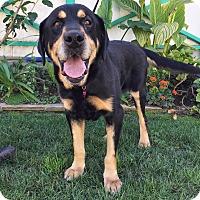 Adopt A Pet :: Goofy - santa monica, CA