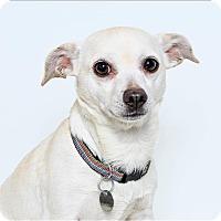 Adopt A Pet :: Flute - San Luis Obispo, CA